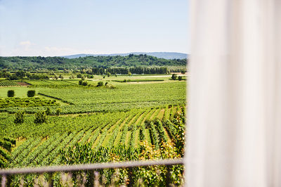 wedding_vineyards_slovenia_view_from_the_room
